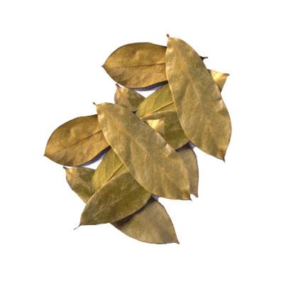hojasdeguanabana